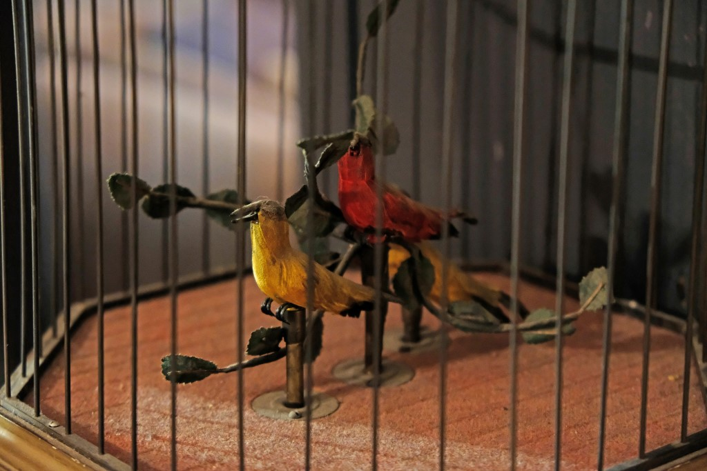 Vogelkooi met geluid